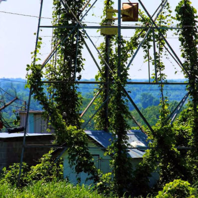 Kudzu Conservationist League Radio Hour